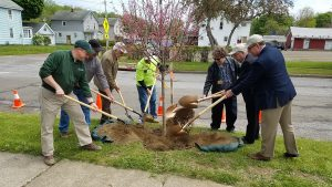 Jamestown Celebrates Arbor Day